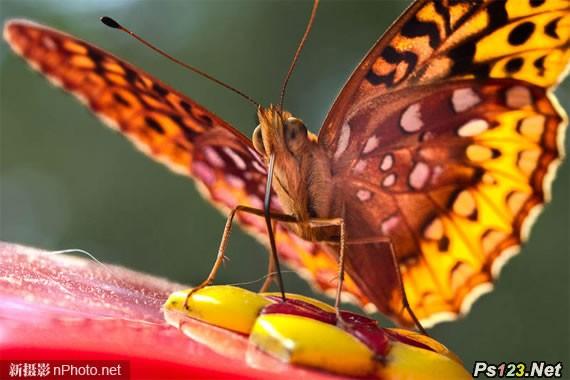 摄影中的色彩运用:了解和控制色彩,运用好色彩拍出精彩照片