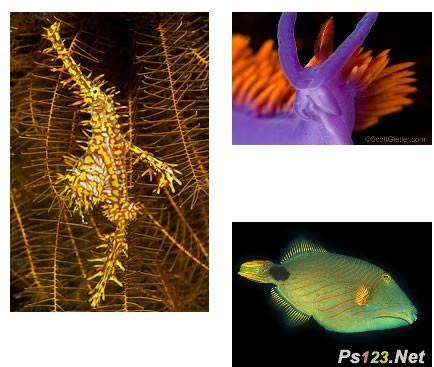 摄影用光知识:水下摄影拍出正确颜色的技巧 三联教程