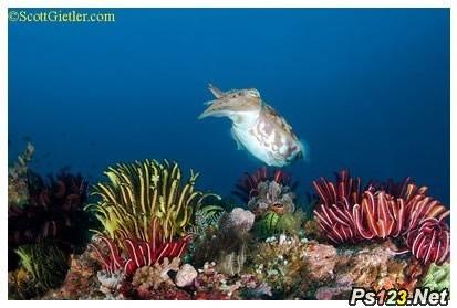 摄影用光知识:水下摄影拍出正确颜色的技巧
