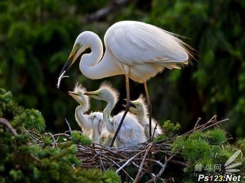 走进白鹭——鸟类摄影攻略之曝光