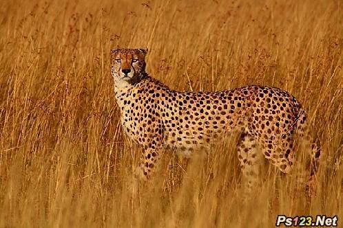 拍摄野生动物需特别注意的技巧