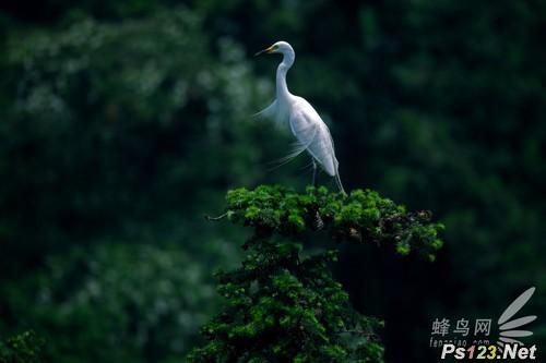 走进白鹭——鸟类摄影攻略之对焦模式
