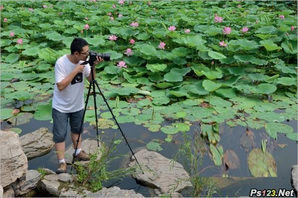 教你如何拍摄朦胧梦幻的荷花效果 摄影教程