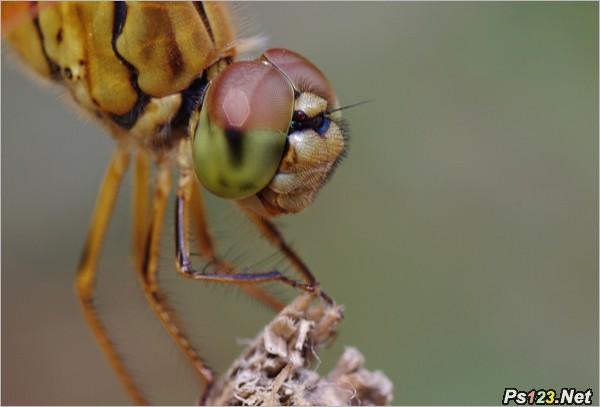 拍�z蜻蜓的�脱� �z影教程