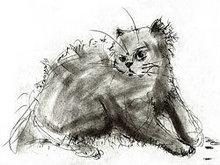手绘线稿猫高清图片3