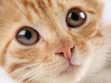 可爱猫咪高清图片6