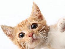 可爱猫咪高清图片5