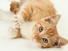 可爱猫咪高清图片1