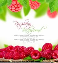红色浆果背景图片