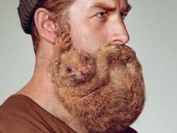 SCHICK剃须刀疯长胡子小动物创意广告设计