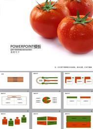 蕃茄栽培技术ppt模板