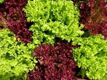 美味绿色沙拉蔬菜图片