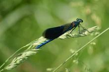小蜻蜓摄影图片