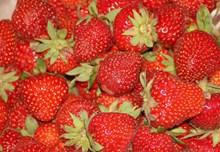 诱人水果草莓高清图片