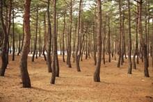 大自然树木景观精美图片