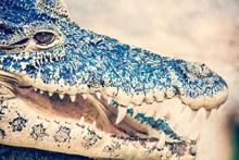鳄鱼头部特写图片下载