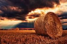 秋天稻草包高清图