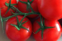 健康红蕃茄高清图