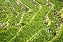 水稻梯田素材精美图片