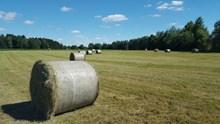农业草地干草垛高清图片