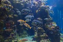水族馆鱼群精美图片