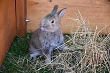 呆萌灰色小兔子精美图片