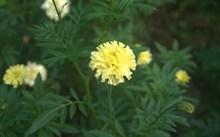 黄色花朵摄影图片素材