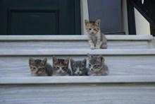 五只可爱小猫图片