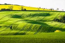 唯美绿草地图片素材