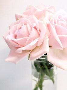 漂亮的粉色玫瑰花图片大全