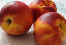 成熟油桃图片素材