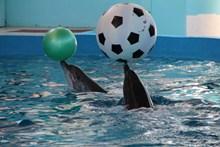 海豚馆海豚表演高清图片