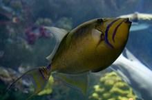 水族馆观赏鱼近景高清图