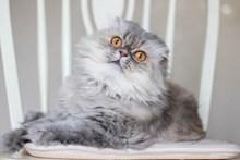 可爱毛绒猫咪高清图