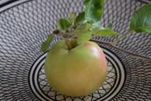 一颗苹果特写精美图片