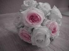 白色手捧玫瑰花束图片大全