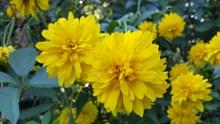 灿烂黄色花朵精美图片