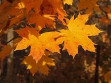 秋季树木黄树叶图片大全
