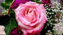 生日玫瑰花束图片