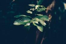 绿色树叶壁纸精美图片