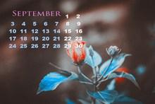 9月日历电脑壁纸高清图片