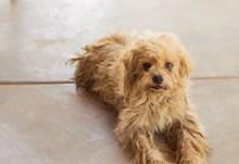 毛绒绒宠物狗图片下载