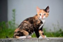 可爱多毛小猫图片