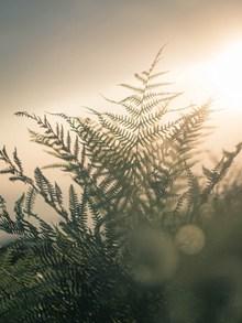 非主流蕨类植物摄影图精美图片