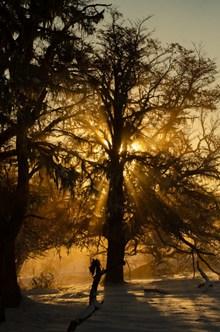 大树剪影高清图片素材