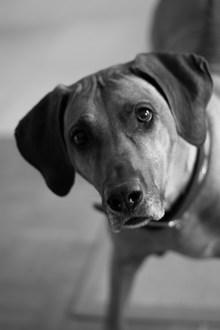 超萌可爱小狗精美图片