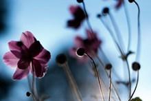非主流花卉摄影图片