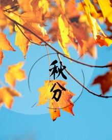 秋分时节高清图片