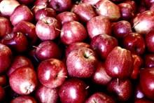 红苹果收成图片大全
