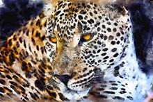 猎豹水彩肖像图片大全